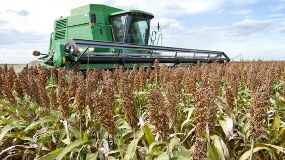 China to impose 178.6 per cent anti-dumping duty on US sorghum