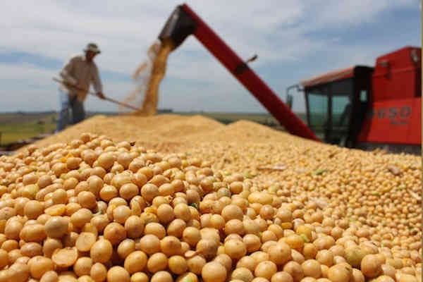 China soybean imports from US